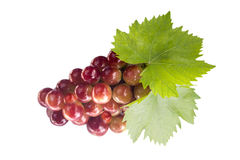 Ripe grapes with leaf Stock Images