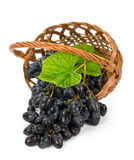 Ripe grapes with leaves in a wicker basket Royalty Free Stock Images