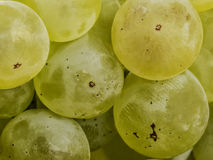 Ripe grapes macro closeup Royalty Free Stock Photo