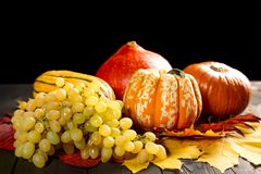 Ripe grapes, marrow and pumpkins on dark wooden background and colorful autumn maple leaves. Autumn seasonal image. stock images