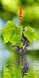 Ripe grapes over the water closeup Royalty Free Stock Photo