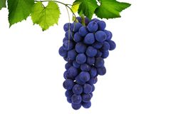Ripe grapes on a white background stock photo