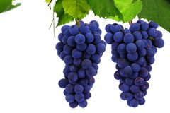 Ripe grapes on a white background royalty free stock images