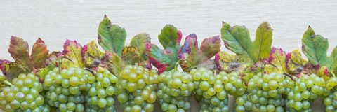 Ripe grapes structure Stock Photos