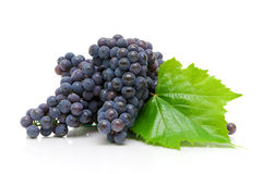 Ripe grapes on a white background close-up Royalty Free Stock Photography