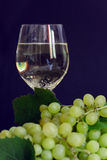 Ripe grapes and white wine Stock Images