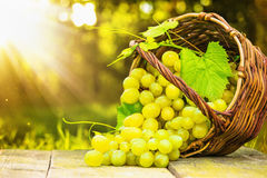 Ripe grapes in wicker basket Stock Images