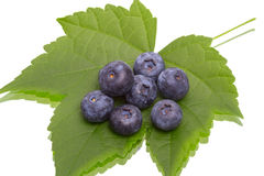 Ripe great bilberry  on a green leaf Royalty Free Stock Images