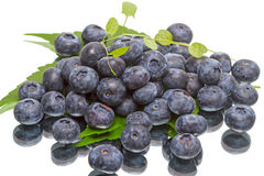 Ripe great bilberry Royalty Free Stock Images