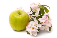 Ripe Green Apple Stock Images