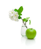 Green apple and apple-tree branch with flowers on a white backgr Royalty Free Stock Photography