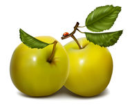 Ripe green apples. Photorealistic . Ripe green apples Royalty Free Stock Photos