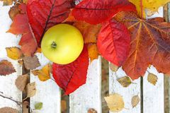 Ripe, green apples in the garden, Autumn time Royalty Free Stock Images