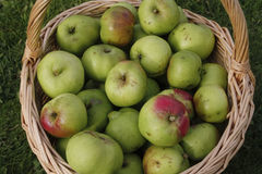 Ripe green apples Royalty Free Stock Image