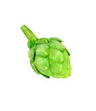 Ripe green artichoke vegetable isolated Royalty Free Stock Photography