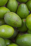 Ripe green avocado fruit stack. Avocado fruit on on an open air market fruit and vegetable stall Stock Photo