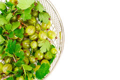 Ripe Green Gooseberry on a White Background Royalty Free Stock Image
