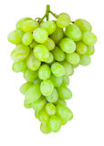 Ripe green grape hanging isolated on white background Royalty Free Stock Photos