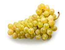 Ripe green grape stock images