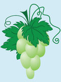 Ripe green grapes Stock Images