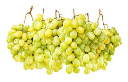 Ripe green grapes hanging against white Royalty Free Stock Photography
