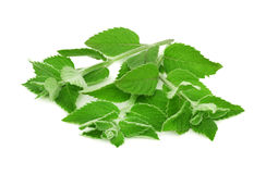 Ripe green mint (isolated) Stock Photography