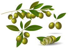 Ripe green olives Royalty Free Stock Image