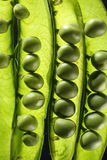 Ripe green peas in a pod Royalty Free Stock Image