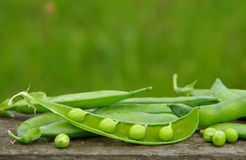 Ripe green peas Stock Images