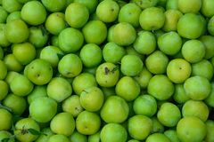 Ripe green sour plums royalty free stock photography
