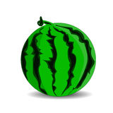 Ripe green watermelon, cartoon on a white background. Royalty Free Stock Photo