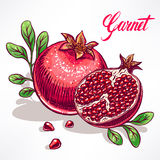 Ripe hand-drawn pomegranate Stock Image