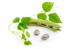 Ripe Haricot Beans with Seed and Leaves Isolated Royalty Free Stock Photos
