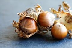 Ripe hazelnut filbert nut Corylus Maxima. Organic cobnuts with dried leaves on stony background. Macro view, selective focus. Foto Royalty Free Stock Photo