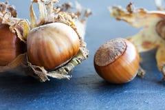 Ripe hazelnut filbert nut Corylus Maxima. Organic cobnuts with dried leaves on stony background. Macro view, selective focus. Ripe hazelnut filbert nut Corylus Royalty Free Stock Photos
