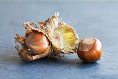 Ripe hazelnut filbert nut Corylus Maxima. Organic cobnuts with dried leaves on stony background. Macro view, selective. Focus Stock Images