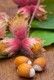 Ripe Hazelnut fruits Stock Image
