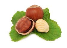 Ripe hazelnuts with green leaves (isolated) Royalty Free Stock Photography