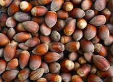 ripe hazelnuts texture Royalty Free Stock Images