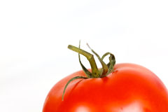 A ripe  home grown tomato on the vine Royalty Free Stock Photography