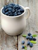 Ripe Honeysuckle Berries Stock Images