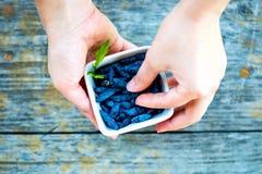 Ripe Honeysuckle Berries in Bowl, Macro Shot Royalty Free Stock Image