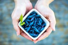 Ripe Honeysuckle Berries in Bowl, Macro Shot Stock Images