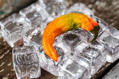 Ripe Hot Serrano Pepper on Ice Cubes. Pepper on Ice. Lightly sprayed with water stock photo