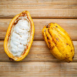 Ripe Indonesia's cocoa . Ripe Indonesia's cocoa  setup on rustic wooden background Royalty Free Stock Photo