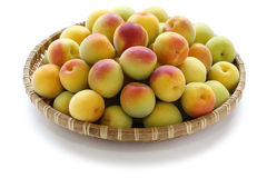 Ripe japanese apricot fruits Stock Photos