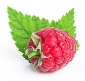 Ripe juice raspberry fruit closeup on white background. Ripe raspberry fruit closeup on white background Royalty Free Stock Image