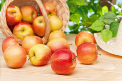 Ripe juicy apples on the table in the garden Stock Photos