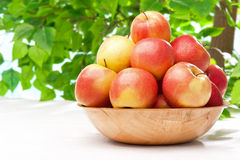 Ripe juicy apples on the table in the garden Royalty Free Stock Images