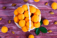 Ripe juicy apricots Royalty Free Stock Photo